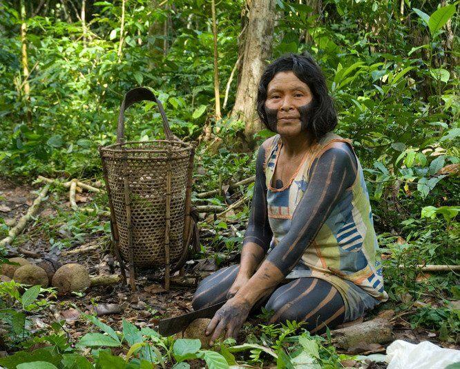 Kayapo woman collecting brazil nuts
